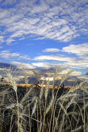 Montana Grain Sky